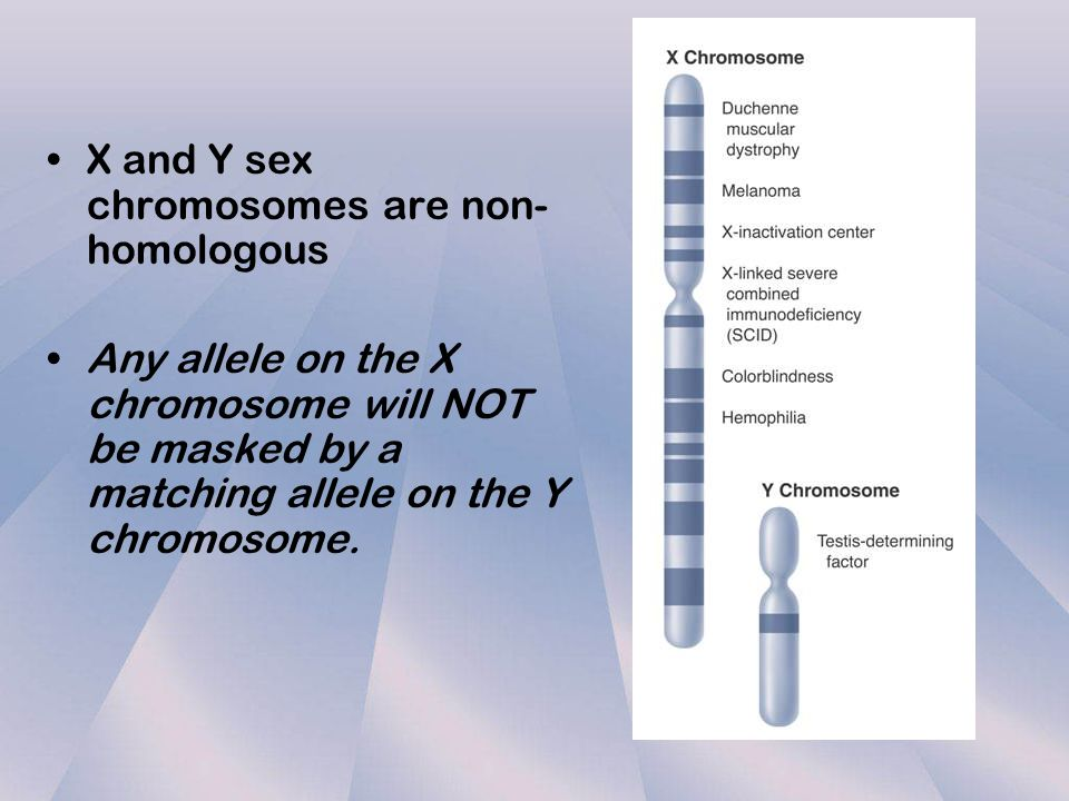 X and Y sex chromosomes are non-homologous