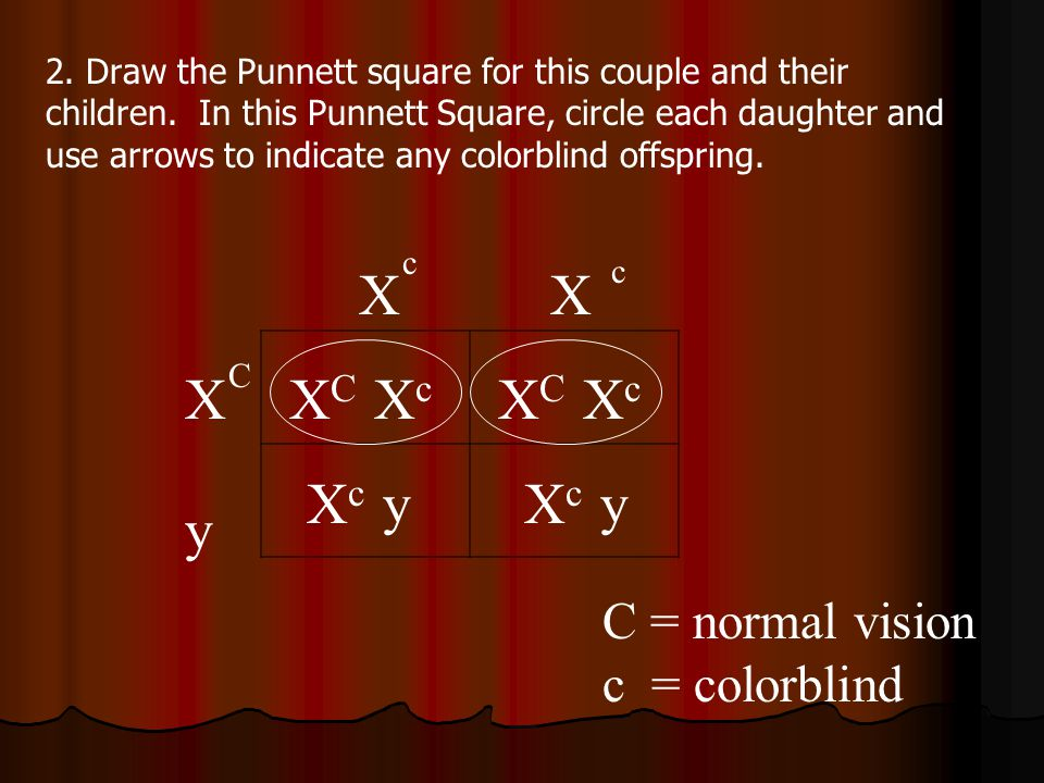 X X X XC Xc XC Xc Xc y Xc y y C = normal vision c = colorblind