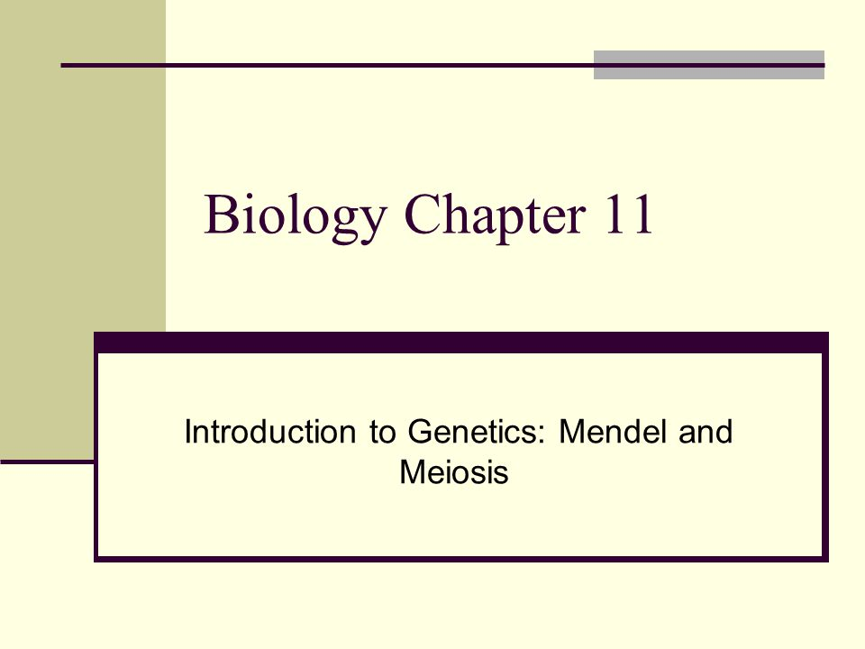Introduction to Genetics: Mendel and Meiosis