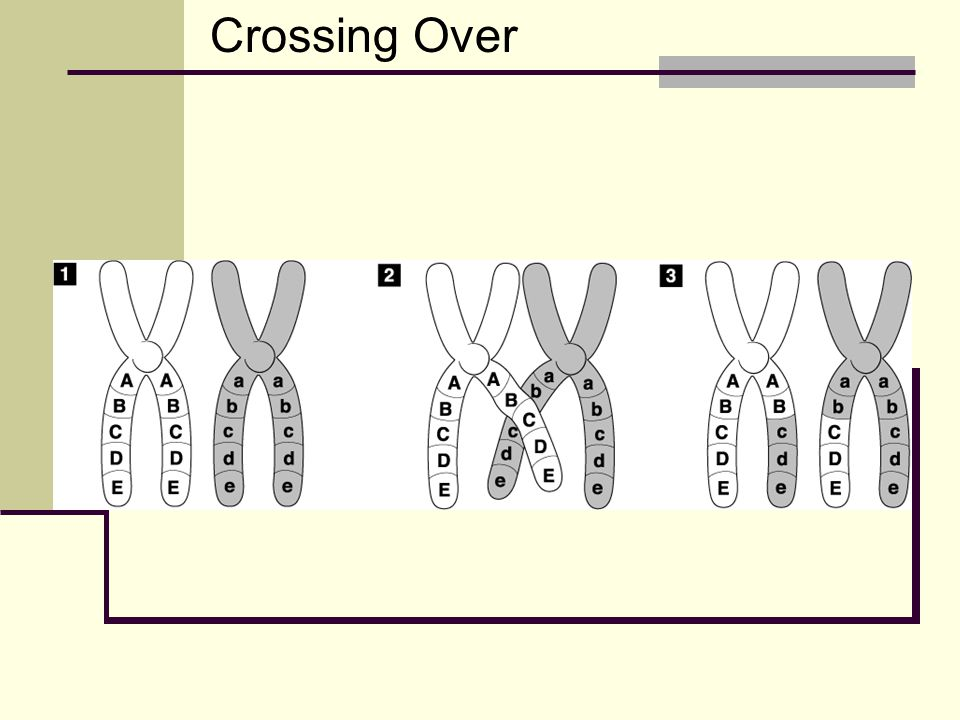 Crossing Over Crossing-Over Go to Section: