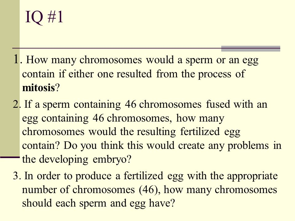 IQ #1 1. How many chromosomes would a sperm or an egg contain if either one resulted from the process of mitosis