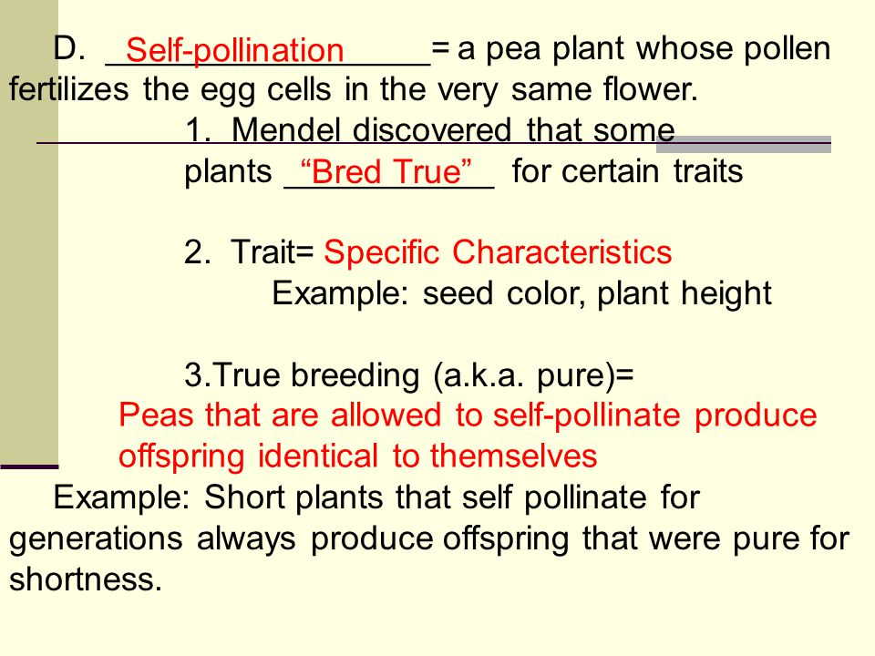 D. _________________= a pea plant whose pollen fertilizes the egg cells in the very same flower.