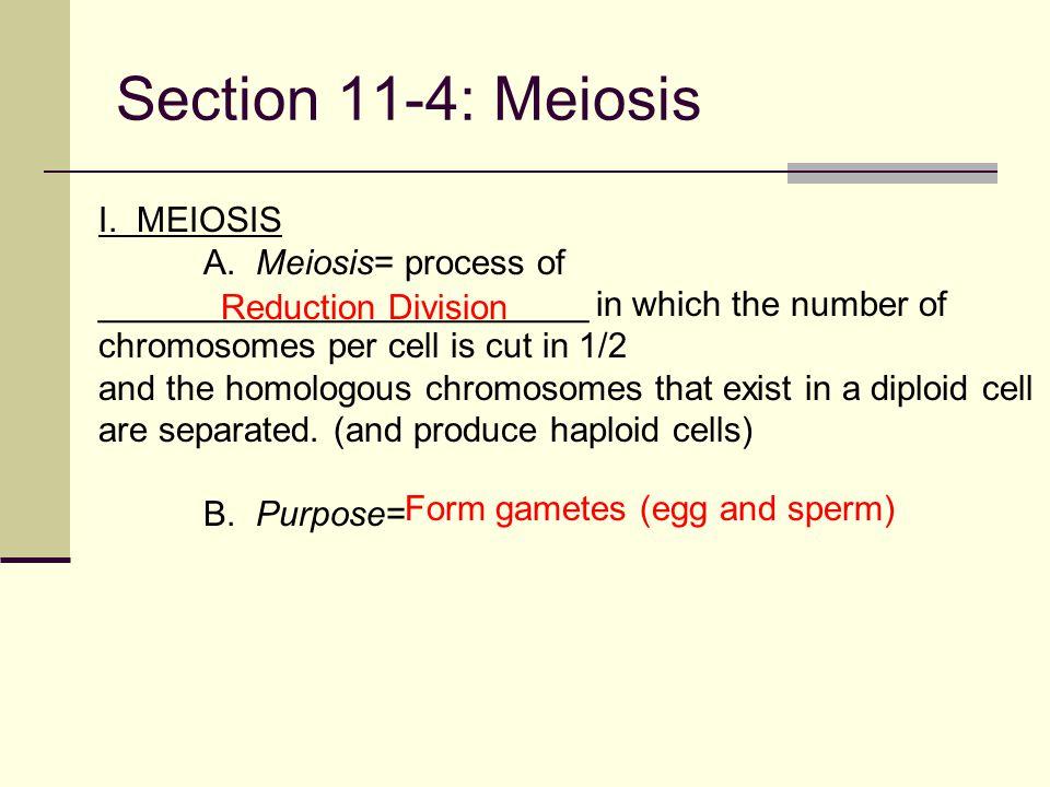 Section 11-4: Meiosis I. MEIOSIS