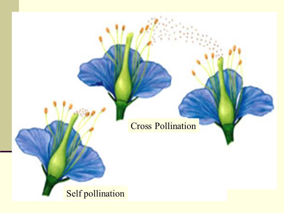 Cross Pollination Self pollination