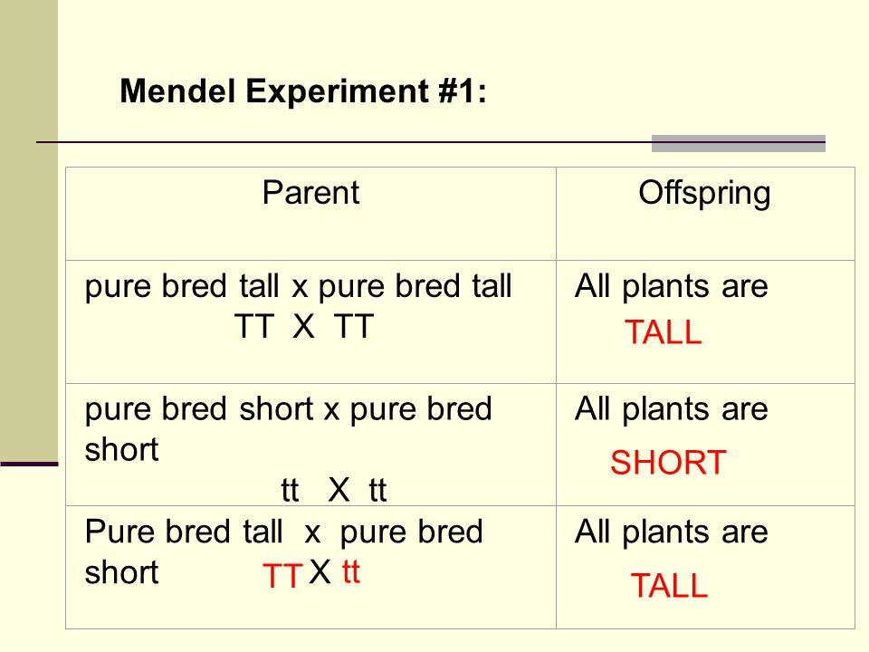 Mendel Experiment #1: Parent. Offspring. pure bred tall x pure bred tall. TT X TT. All plants are.