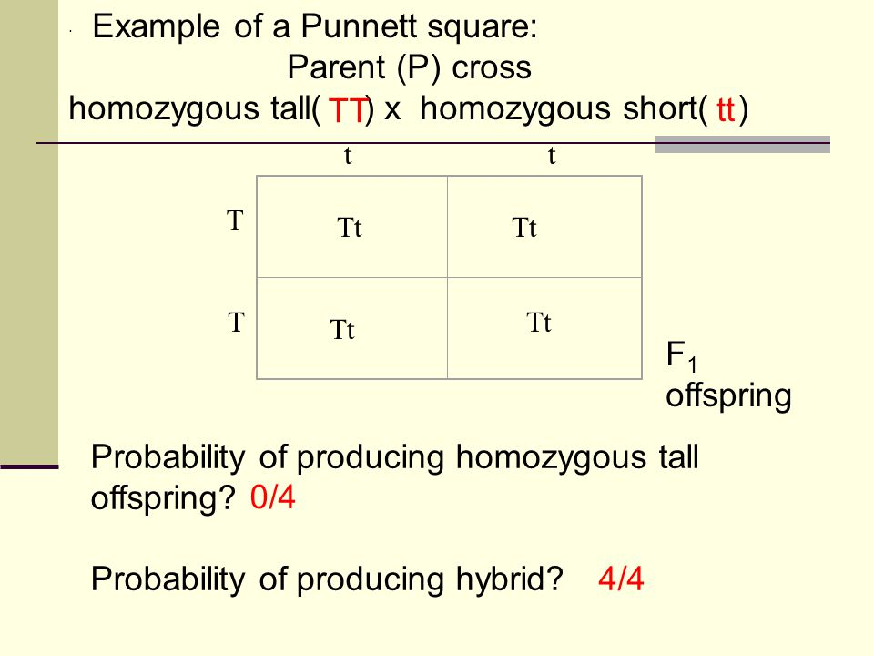 homozygous tall( ) x homozygous short( ) TT tt