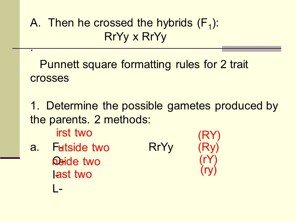 A. Then he crossed the hybrids (F1):