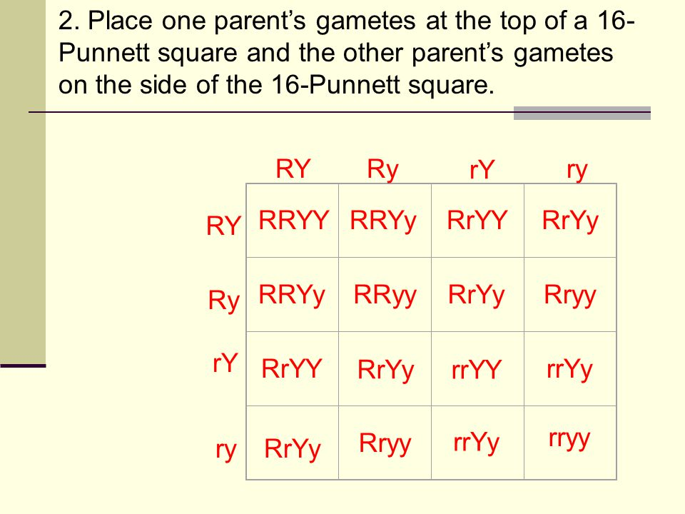 2. Place one parent's gametes at the top of a 16-Punnett square and the other parent's gametes on the side of the 16-Punnett square.