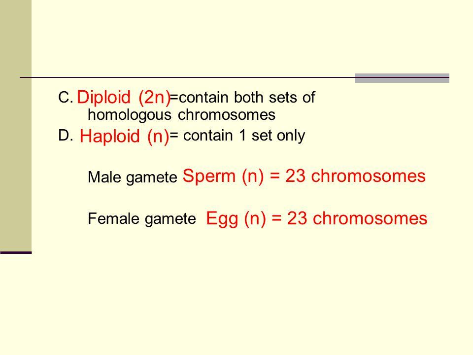 Sperm (n) = 23 chromosomes