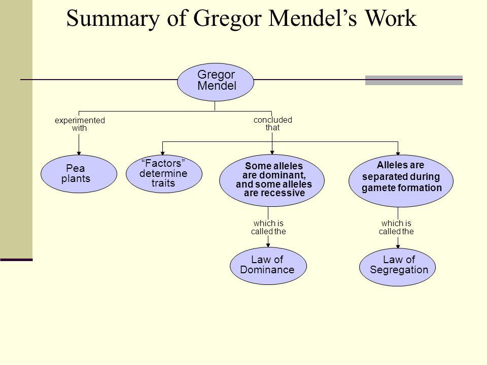 Summary of Gregor Mendel's Work