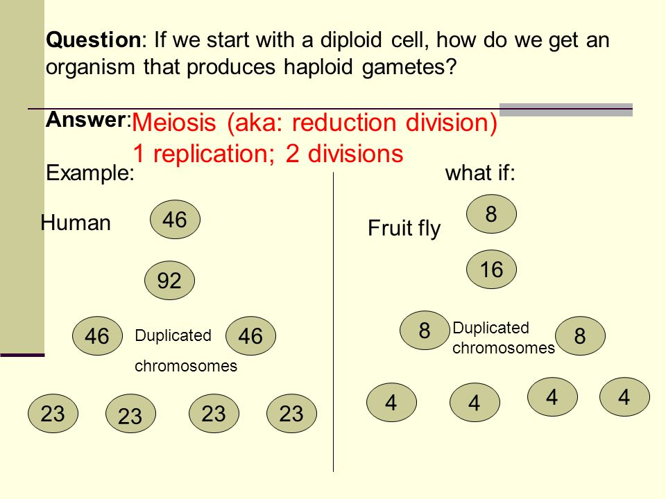 Meiosis (aka: reduction division) 1 replication; 2 divisions