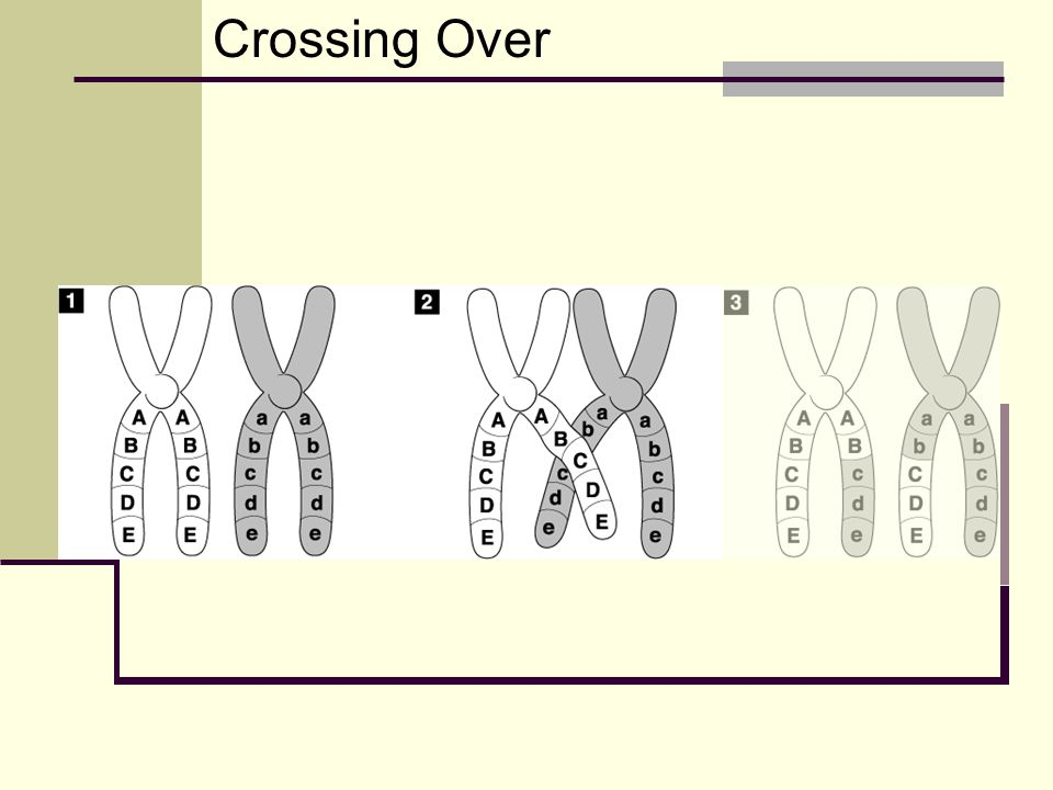 Crossing Over Go to Section: