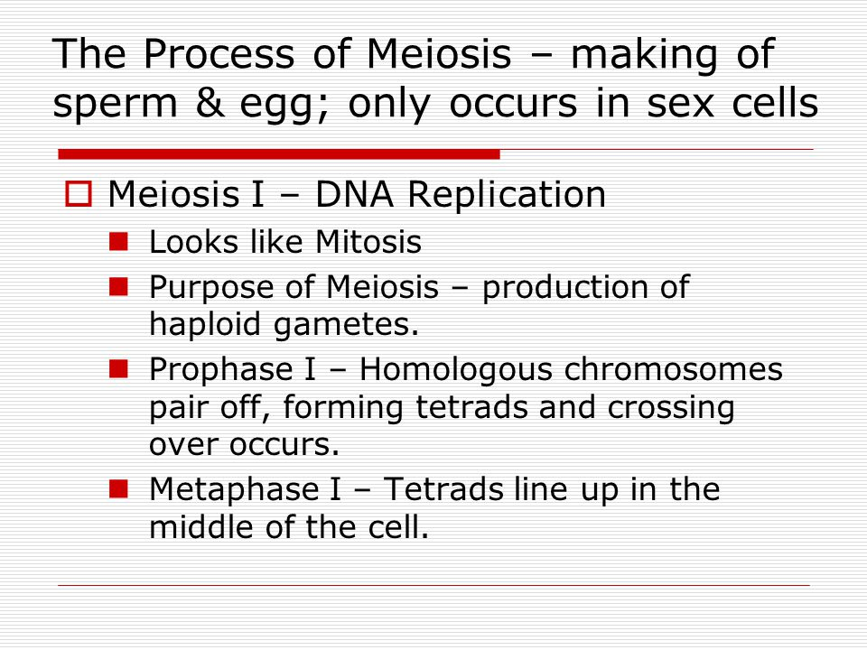 The Process of Meiosis – making of sperm & egg; only occurs in sex cells