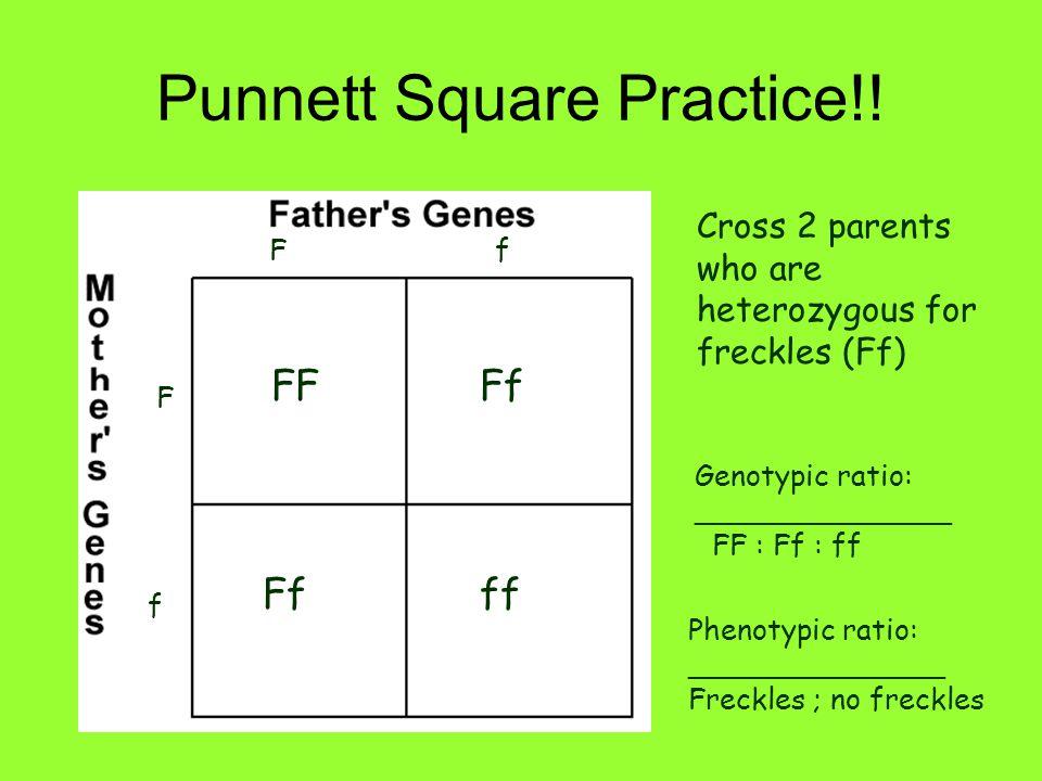 Punnett Square Practice!!