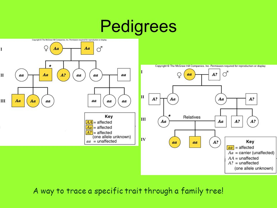 Pedigrees A way to trace a specific trait through a family tree!