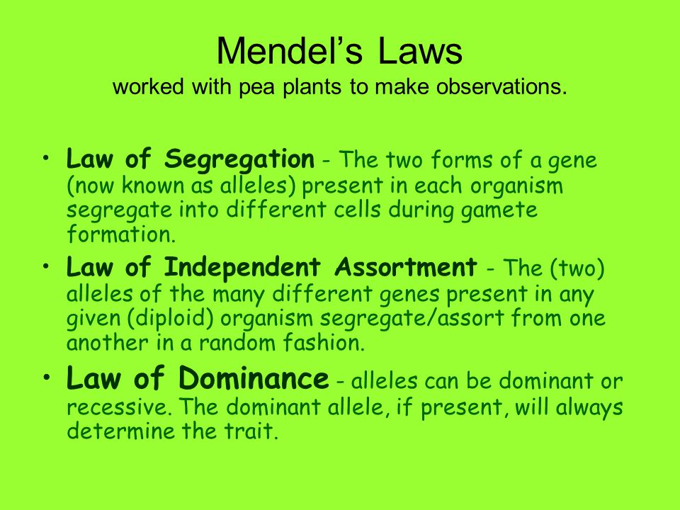 Mendel's Laws worked with pea plants to make observations.