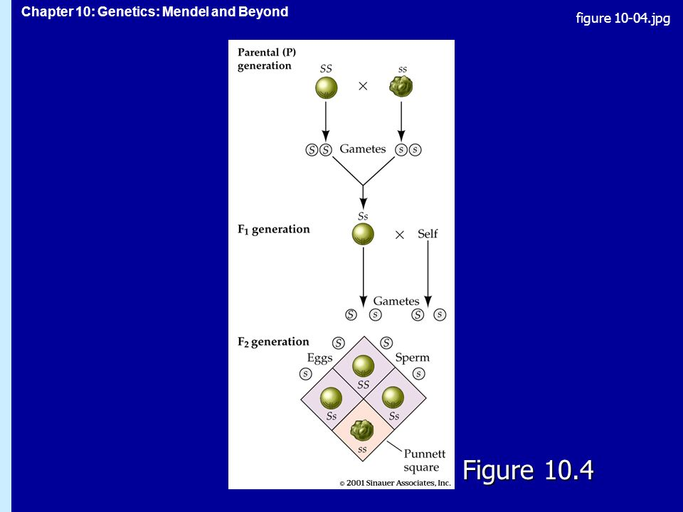 figure 10-04.jpg Figure 10.4 Figure 10.4