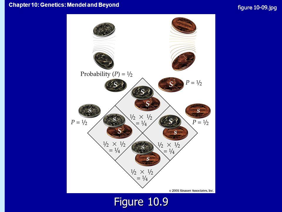 figure 10-09.jpg Figure 10.9 Figure 10.9