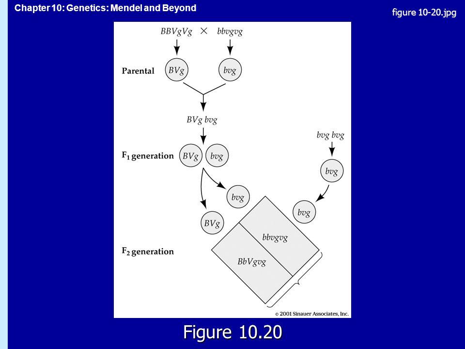 figure 10-20.jpg Figure 10.20 Figure 10.20