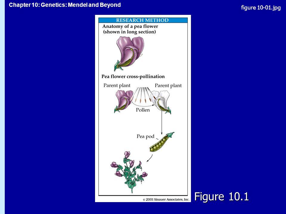 figure 10-01.jpg Figure 10.1 Figure 10.1