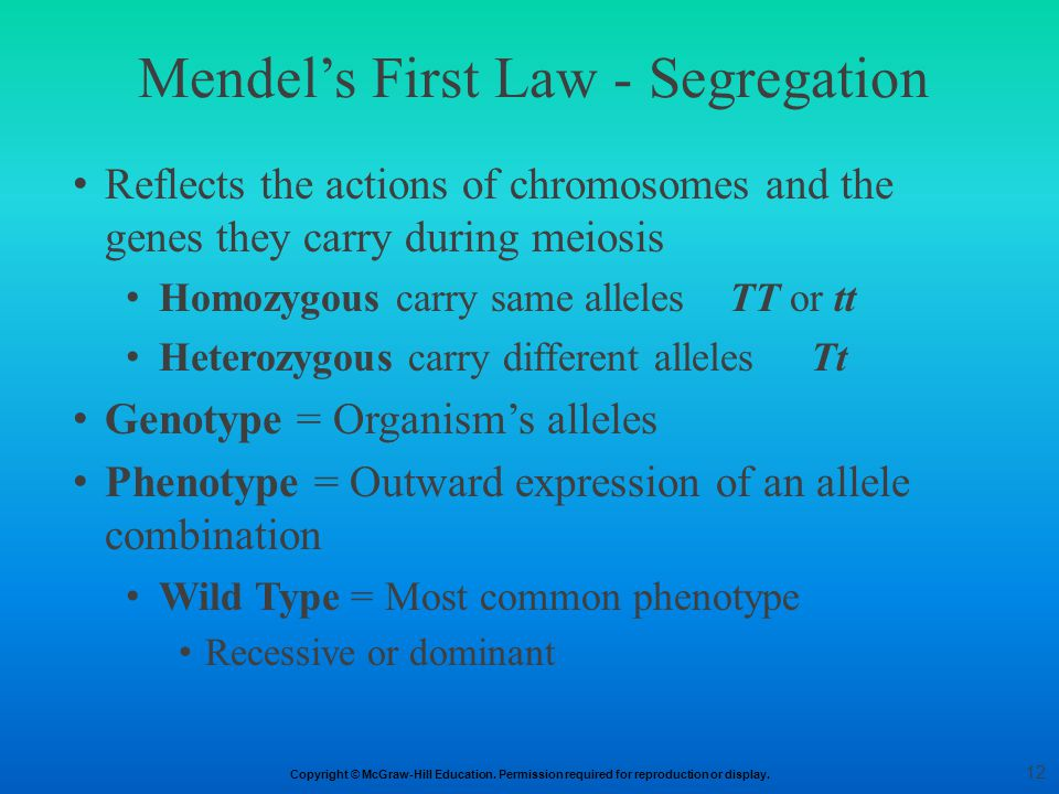 Mendel's First Law - Segregation