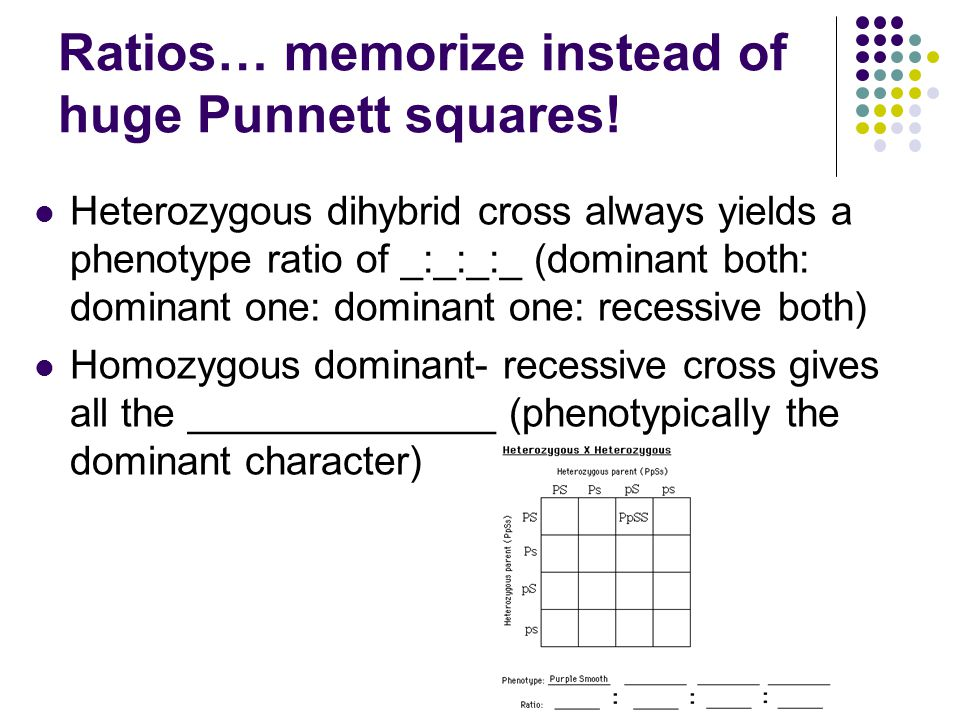 Ratios… memorize instead of huge Punnett squares!