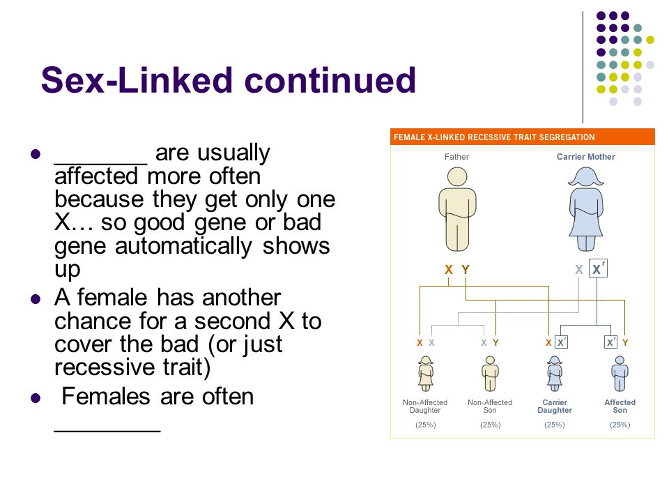 Sex-Linked continued _______ are usually affected more often because they get only one X… so good gene or bad gene automatically shows up.