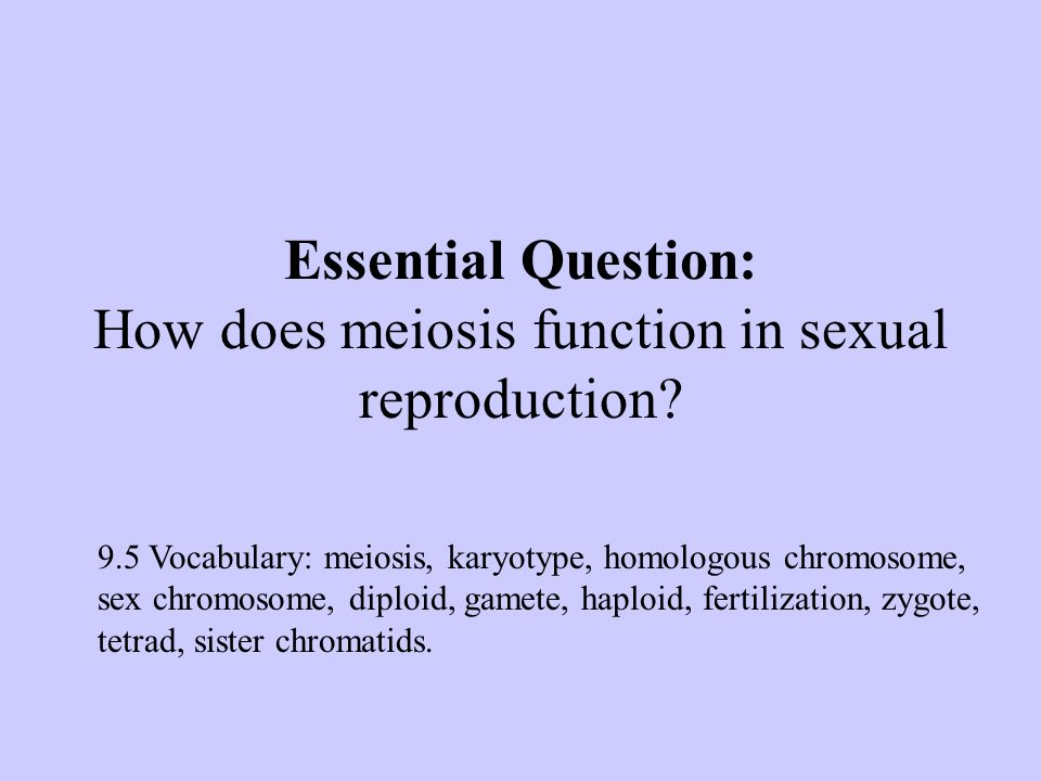 Essential Question: How does meiosis function in sexual reproduction