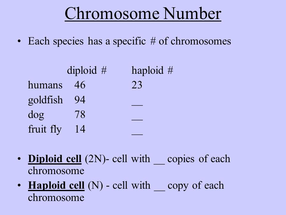 Chromosome Number Each species has a specific # of chromosomes