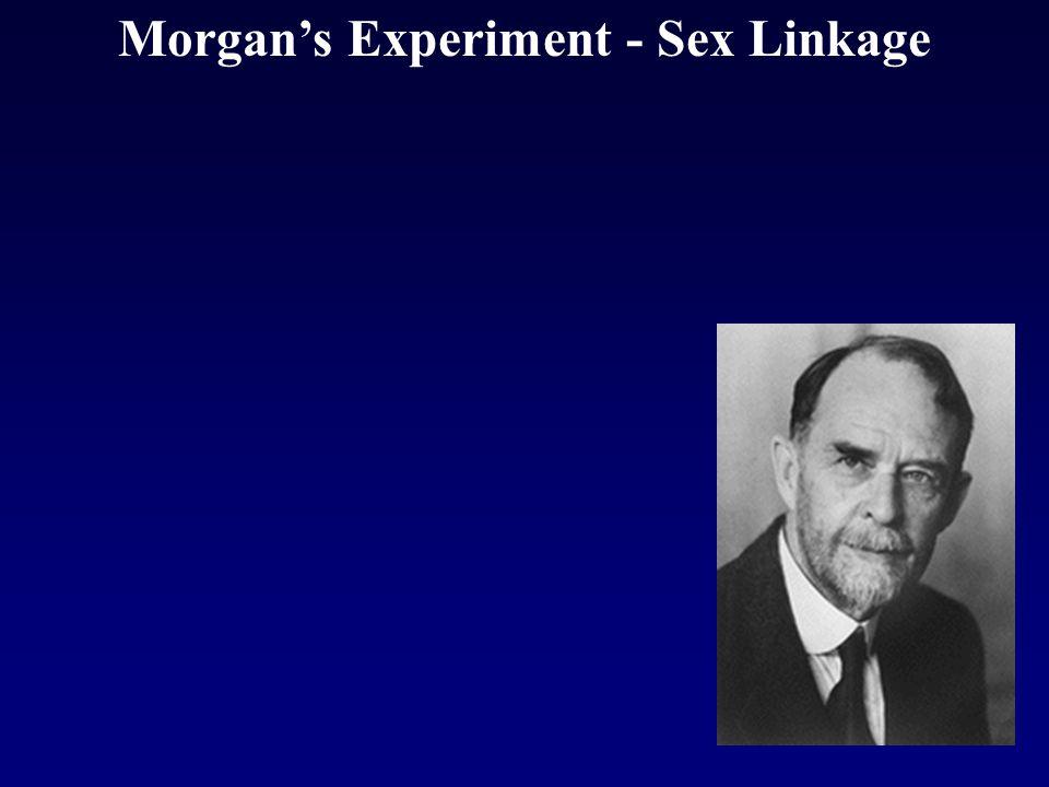 Morgan's Experiment - Sex Linkage