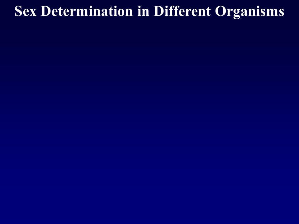 Sex Determination in Different Organisms