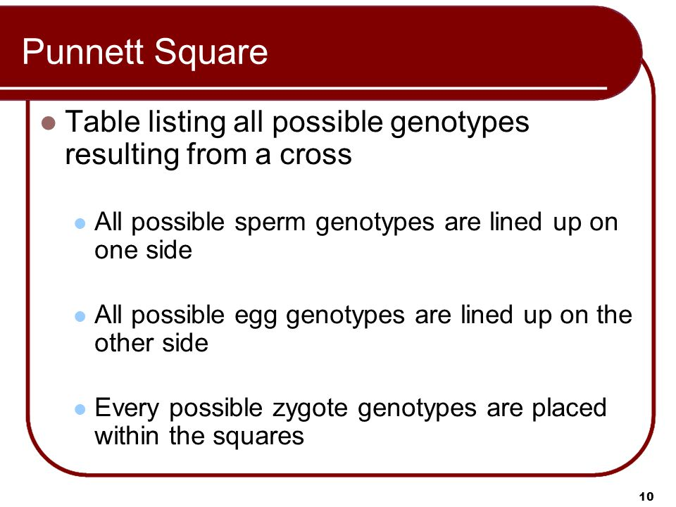 Punnett Square Table listing all possible genotypes resulting from a cross. All possible sperm genotypes are lined up on one side.