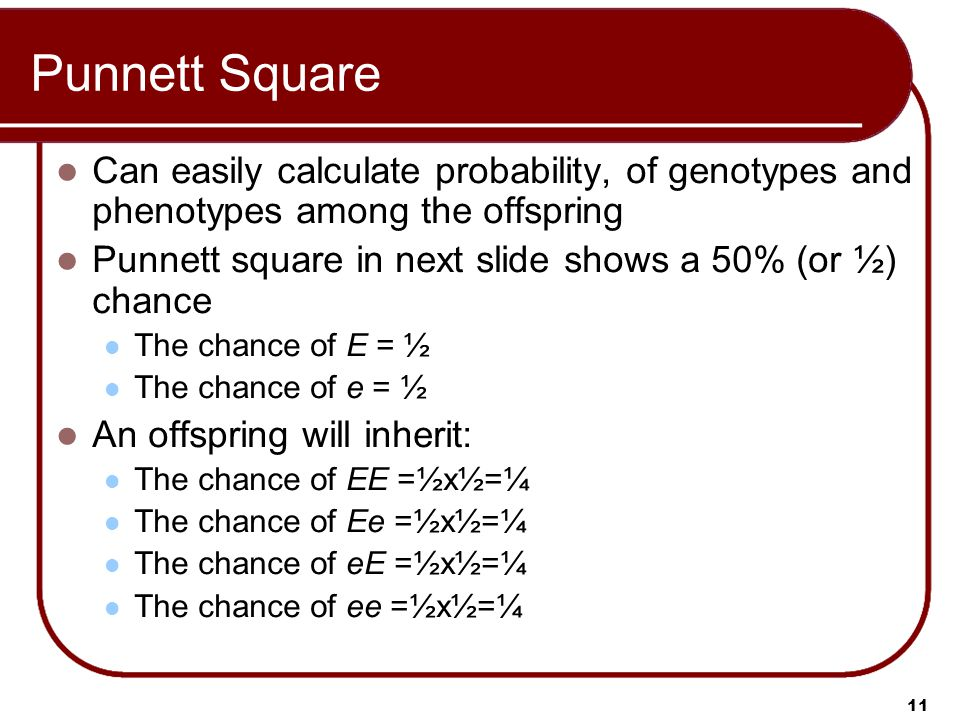 Punnett Square Can easily calculate probability, of genotypes and phenotypes among the offspring.