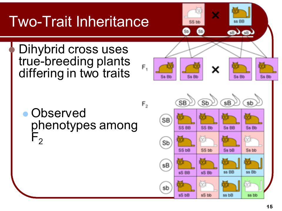 Two-Trait Inheritance