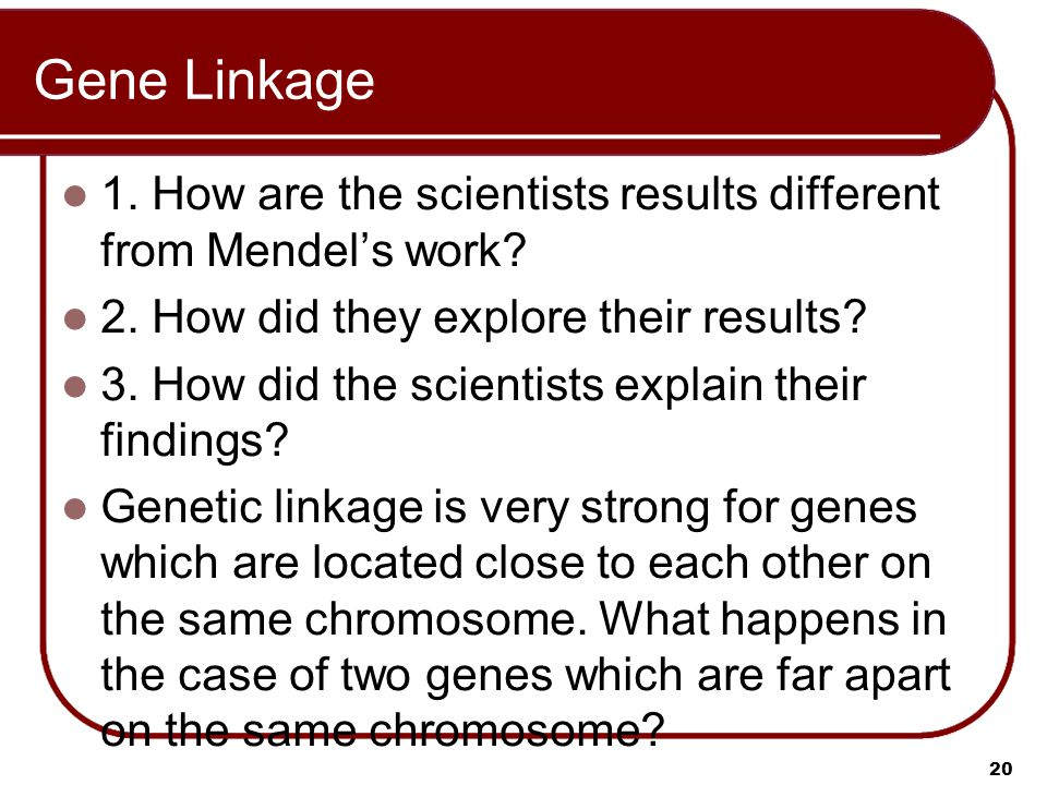 Gene Linkage 1. How are the scientists results different from Mendel's work 2. How did they explore their results