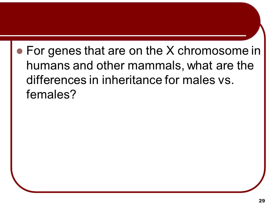 For genes that are on the X chromosome in humans and other mammals, what are the differences in inheritance for males vs.