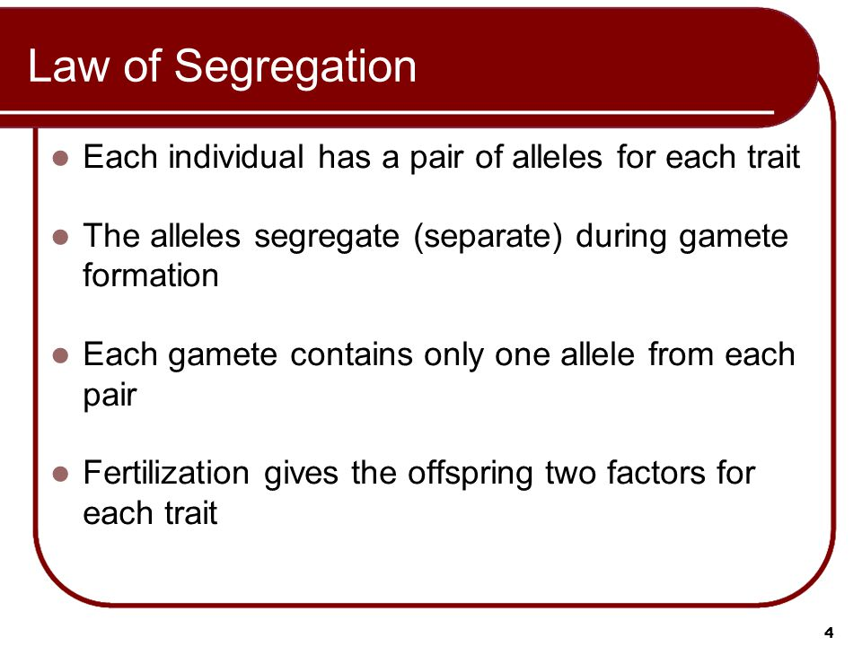 Law of Segregation Each individual has a pair of alleles for each trait. The alleles segregate (separate) during gamete formation.
