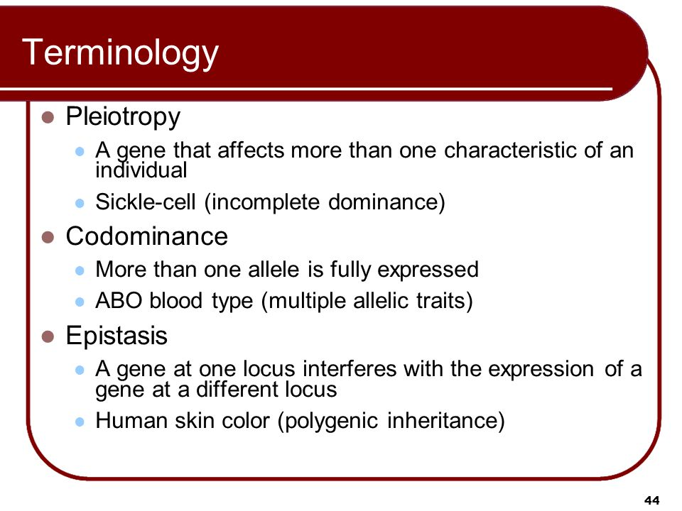 Terminology Pleiotropy Codominance Epistasis