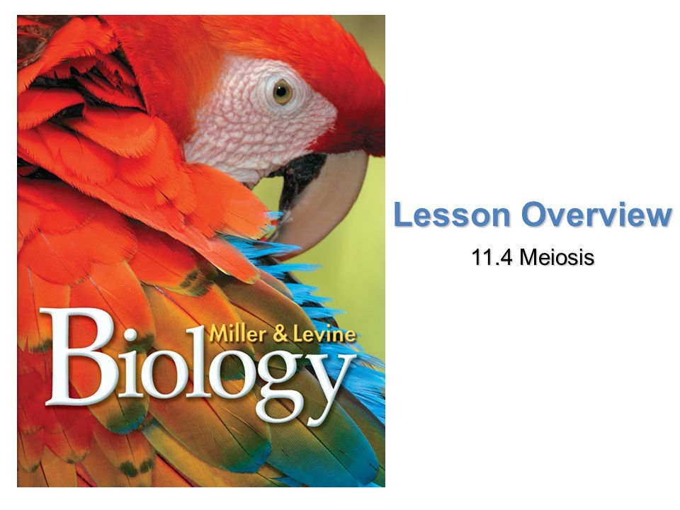 Lesson Overview 11.4 Meiosis