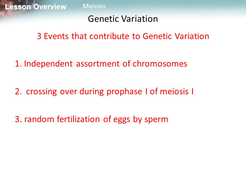 3 Events that contribute to Genetic Variation