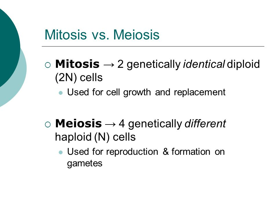 Mitosis vs. Meiosis Mitosis → 2 genetically identical diploid (2N) cells. Used for cell growth and replacement.