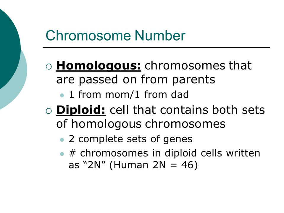 Chromosome Number Homologous: chromosomes that are passed on from parents. 1 from mom/1 from dad.