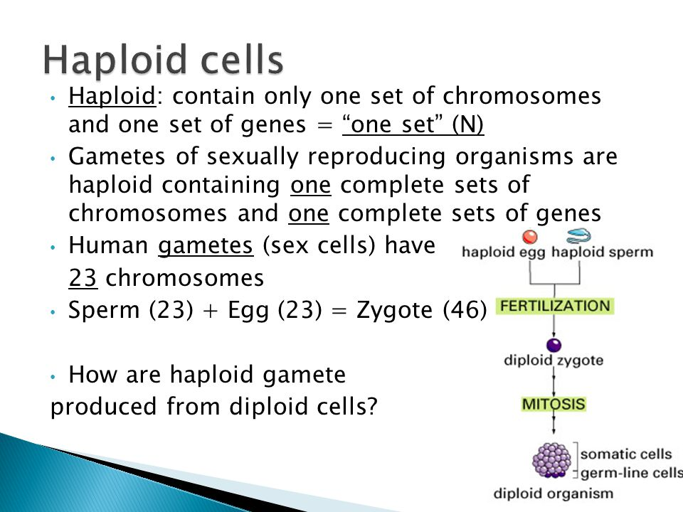 Haploid cells Haploid: contain only one set of chromosomes and one set of genes = one set (N)