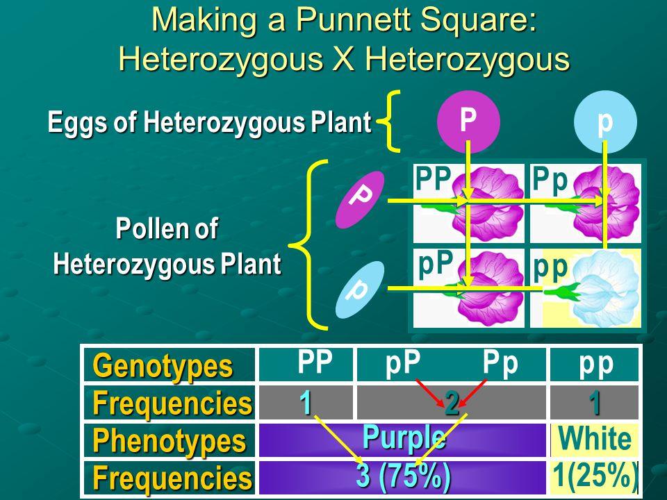 Pollen of Heterozygous Plant