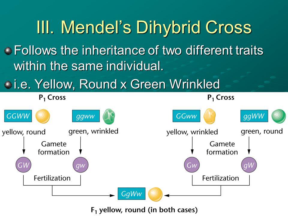 III. Mendel's Dihybrid Cross