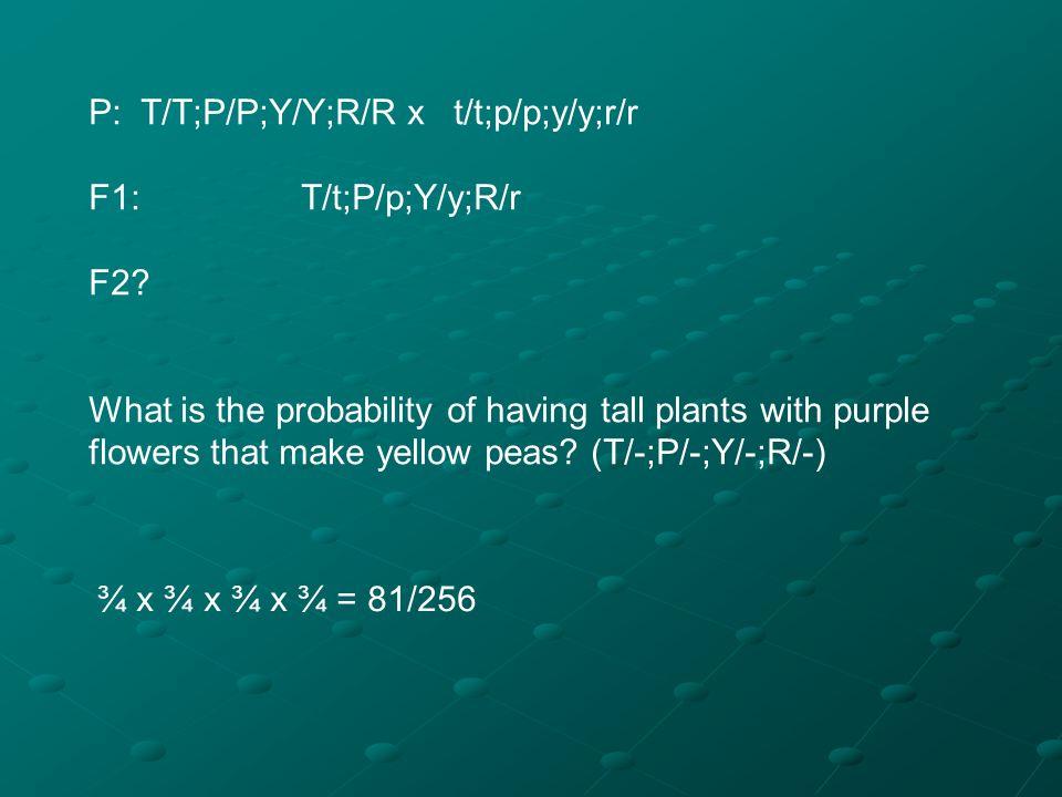 P: T/T;P/P;Y/Y;R/R x t/t;p/p;y/y;r/r