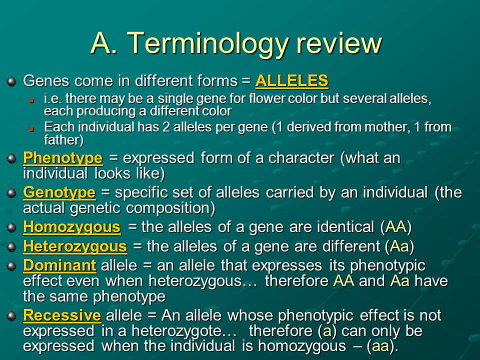 A. Terminology review Genes come in different forms = ALLELES