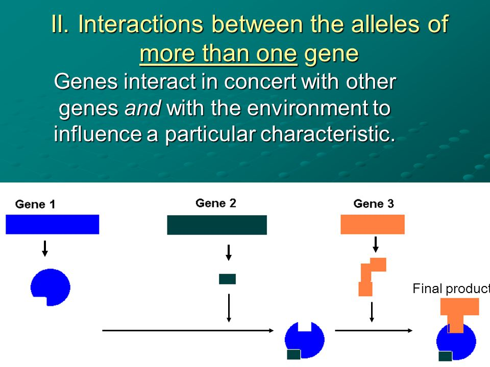 II. Interactions between the alleles of more than one gene