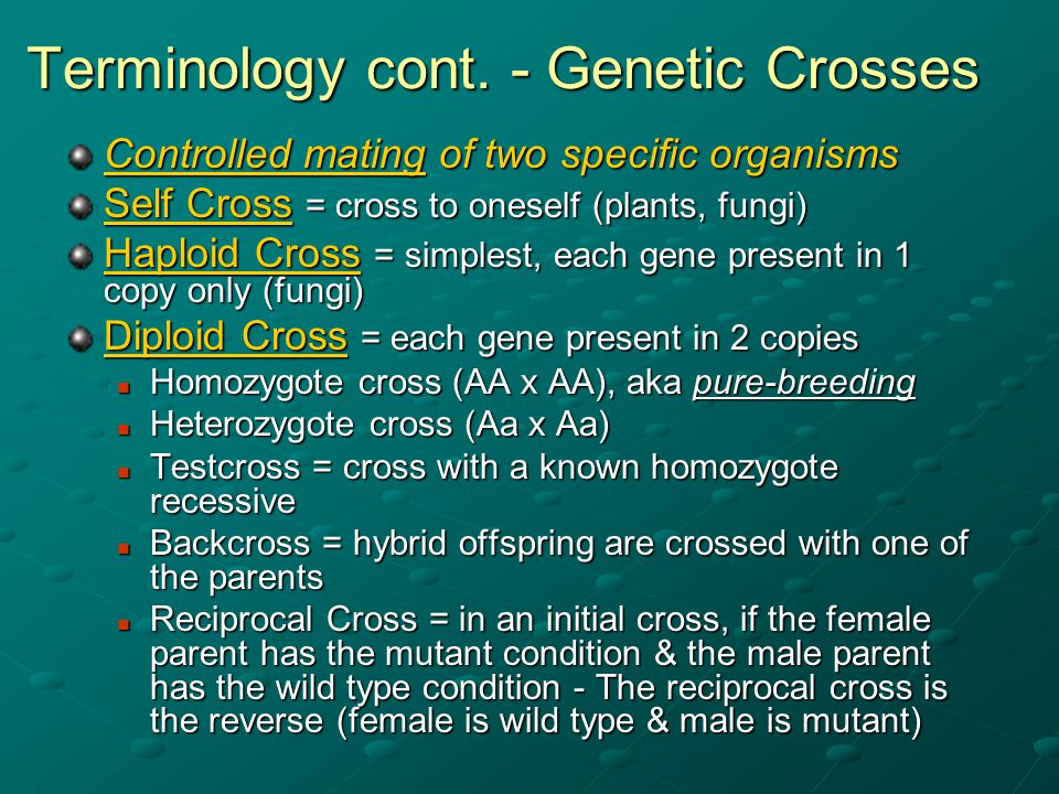 Terminology cont. - Genetic Crosses