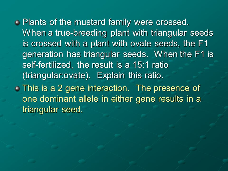 Plants of the mustard family were crossed